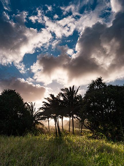 maui-hawaii-shell-eide-and-jonas-kiesecker-photography-10